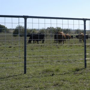 "50"" High X 16' Wide Cattle Panel"